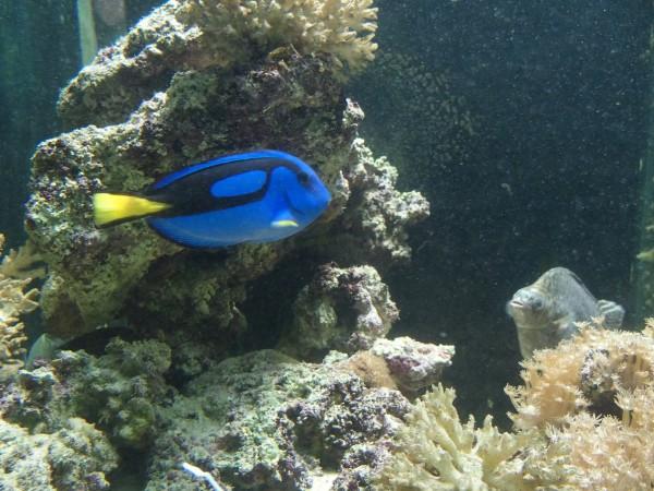 Dory aquarium de Lamaï Koh Samui
