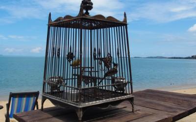 Koh Samui : détente, soleil et pluie
