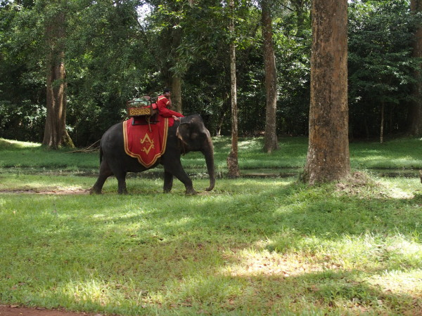 Eléphant à Angkor