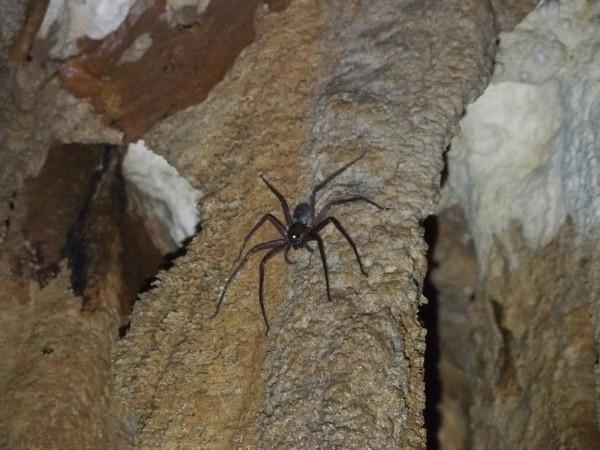 Énorme araignée - Grotte baies d'Ha Long et Lan Ha - Vietnam
