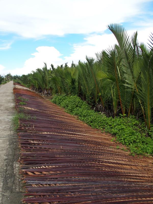 Branches de palmiers à sécher - Hoi An - Vietnam