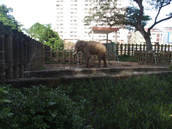 Un éléphant en ville - zoo de Saigon - Vietnam