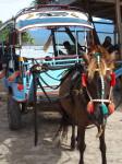 Cidomo {charette à cheval} à Gili Air