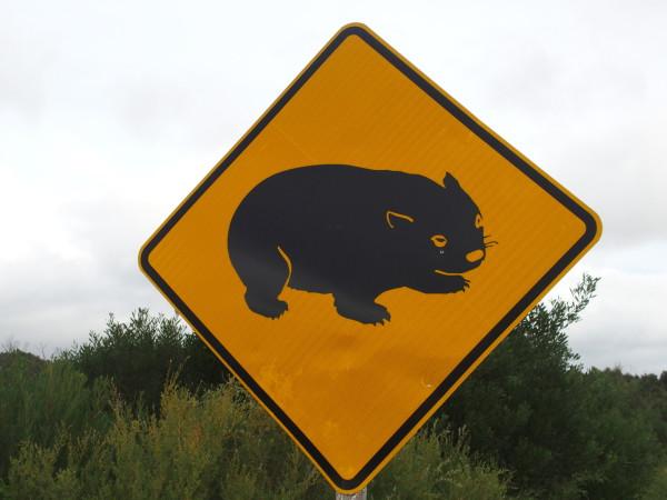 Panneau wombat - Wilsons Promontory - Australie