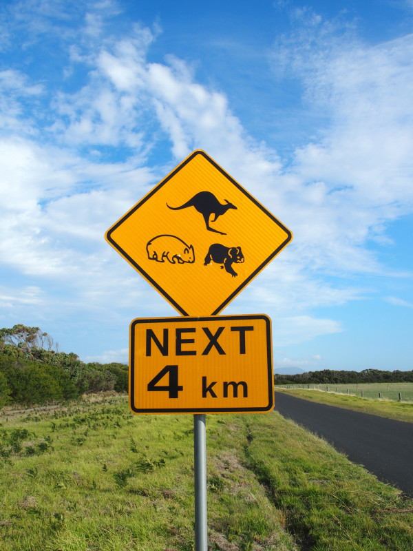 Panneau kangourou, wombat et koala - Wilsons promontory - Australie