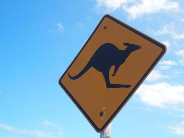 Panneau kangourou - Portland - Australie